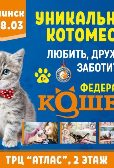 Afisha-go. Афиша мероприятий: Выставка кошек
