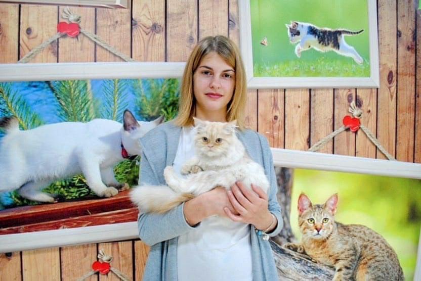 Афиша - Обнинск: Выставка кошек