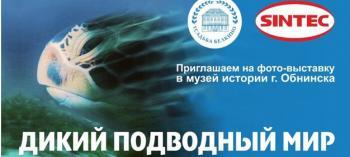 Обнинск. Отдых и развлечения: Фотовыставка «Дикий подводный мир»