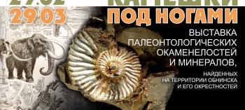 Обнинск. Отдых и развлечения: Выставка палеонтологических окаменелостей и минералов