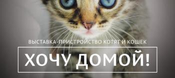 Обнинск. Отдых и развлечения: Выставка-пристройство кошек и котят