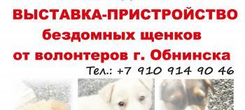Afisha-go. Афиша мероприятий: Выставка-пристройство щенков