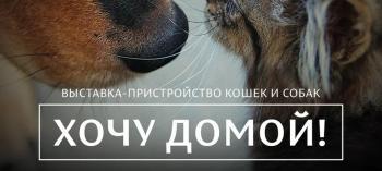 Обнинск. Отдых и развлечения: Выставка-раздача животных