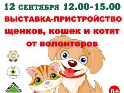 Afisha-go. Афиша мероприятий: Выставка-пристройство кошек, котят, щенков